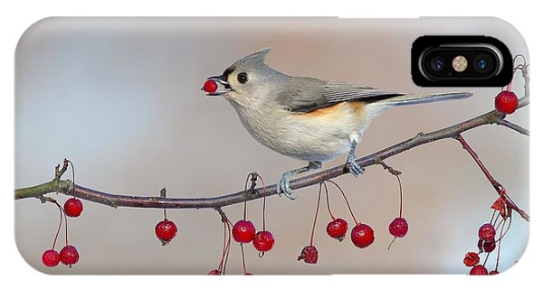 Tufted Titmouse With Red Berry IPhone Case