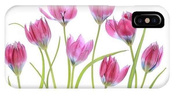 Flower Gardens iPhone Case - Tulip Blush by Mandy Disher