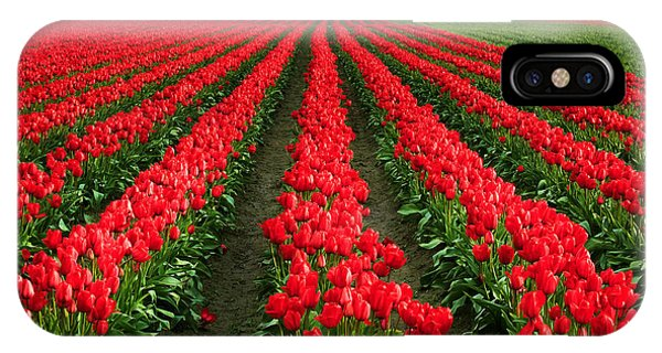Agronomy iPhone Case - Tulip Cornucopia by Inge Johnsson