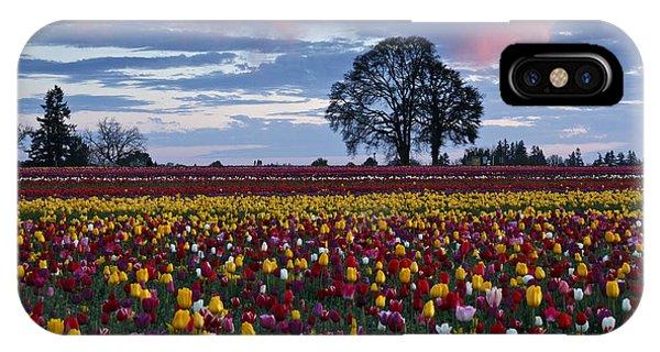 Tulip Field's Last Colors IPhone Case