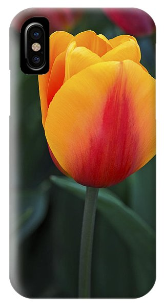 Tulip Flame Phone Case by David Lunde