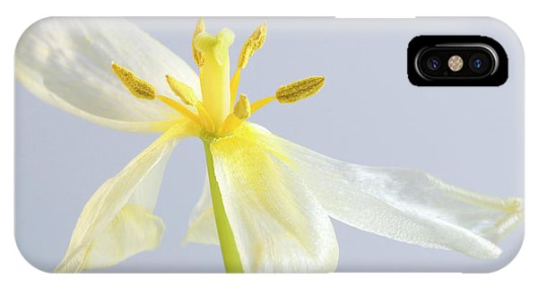 Stamen iPhone Case - Tulip Flower After Flowering by Maria Mosolova/science Photo Library