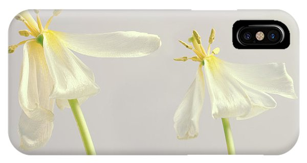 Stamen iPhone Case - Tulip Flowers After Flowering by Maria Mosolova/science Photo Library