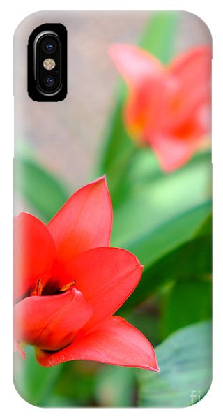 Tulip Of Dream IPhone Case