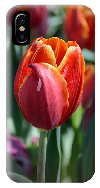Tulip With A Twist IPhone Case
