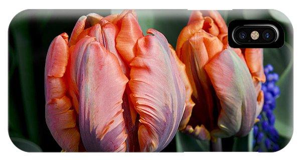 Irene Parrot Tulips IPhone Case