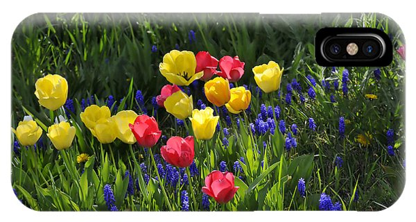 Tulips And Grape Hyacinths IPhone Case
