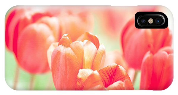Tulips In The Sun IPhone Case