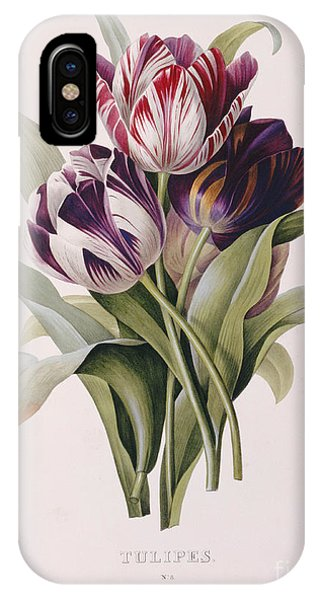 Botanical iPhone Case - Tulips by Pierre Joseph Redoute