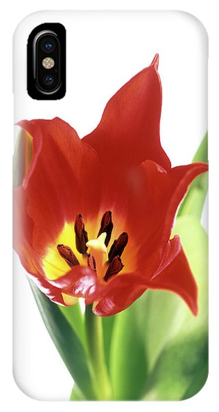Pistil iPhone Case - Tulip's Reproductive Structures by Derek Lomas / Science Photo Library