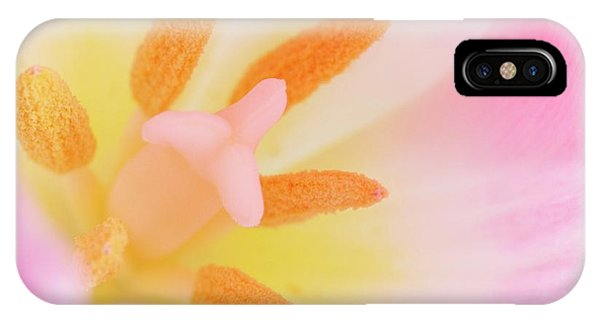 Pistil iPhone Case - Tulip's Reproductive Structures by Maria Mosolova/science Photo Library