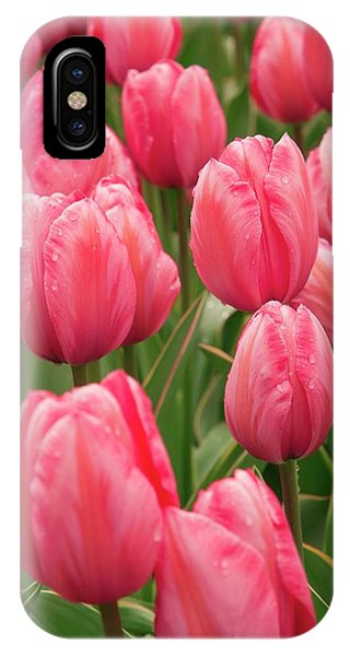 Tulips (tulipa 'design Impression') Phone Case by Adrian Thomas/science Photo Library