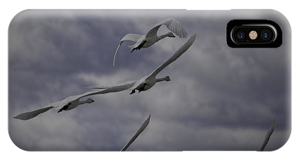 Tundra Swans Taking Flight 1 IPhone Case