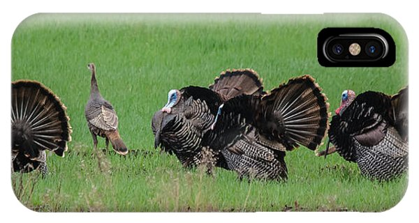 Turkey Mating Ritual IPhone Case