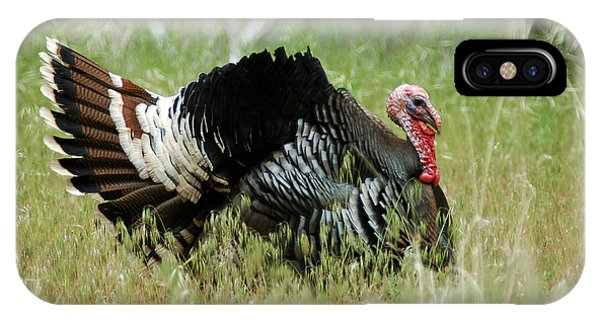 902p Wild Tom Turkey IPhone Case