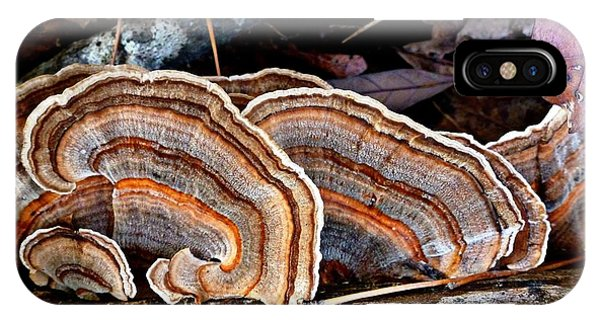 Turkey Tail Fungi In Autumn IPhone Case