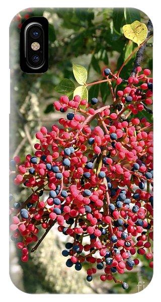 Turpentine Fruit (pistacia Terebinthus) Phone Case by Martyn F. Chillmaid