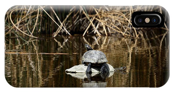 Turtle On Turtle IPhone Case