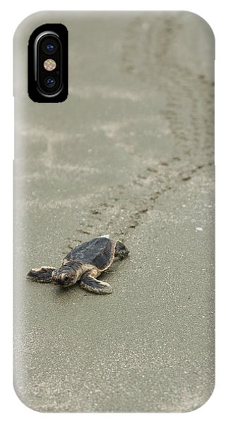 Turtle Tracks IPhone Case