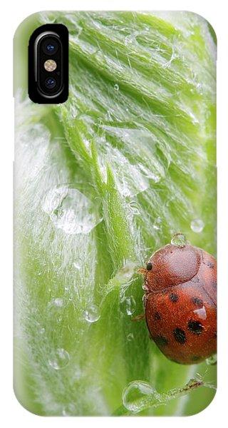 Twentyfour-spot Ladybird IPhone Case