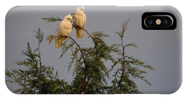 Twin Cockatoos IPhone Case