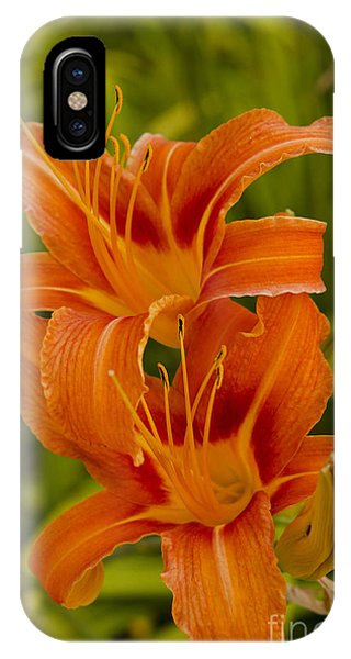 Twin Orange Trumpet Lilies IPhone Case