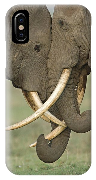 Two African Elephants Fighting IPhone Case