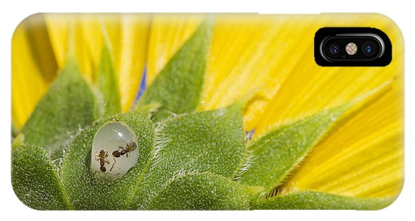 Two Ants Entombed In Sunflower Resin IPhone Case