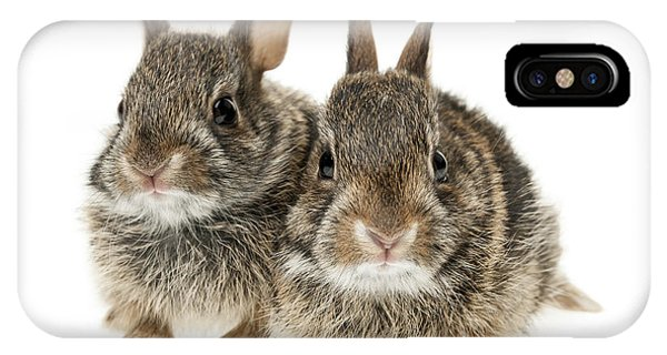 Two Baby Bunny Rabbits IPhone Case
