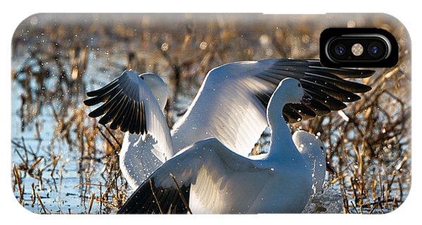 Two Backlit Snow Geese IPhone Case