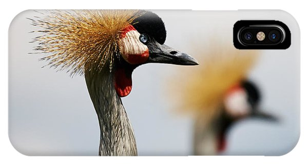 Two Black Crowned Cranes IPhone Case