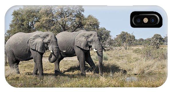 Two Bull African Elephants - Okavango Delta IPhone Case