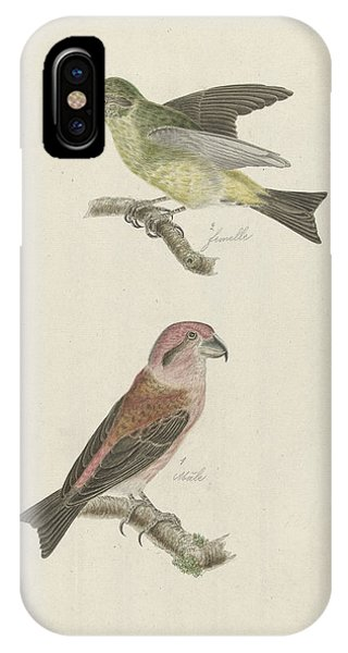 Two Crossbills, Possibly Christiaan Sepp IPhone Case