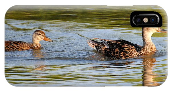 Two Ducks Swimming IPhone Case