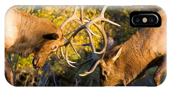 Two Elk Bulls Sparring IPhone Case