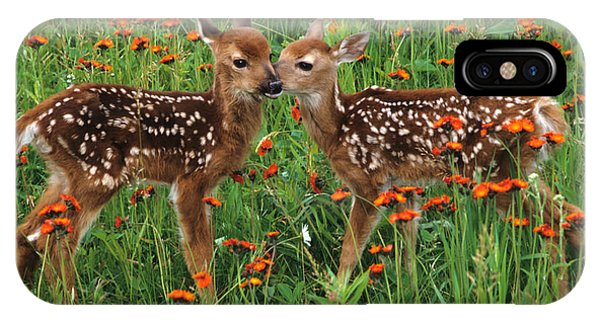 White Tailed Deer iPhone Case - Two Fawns Talking by Chris Scroggins