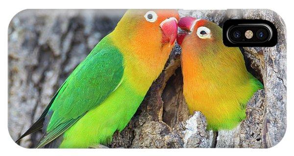 Lovebird iPhone Case - Two Fischer's Lovebirds (agapornis by James Heupel