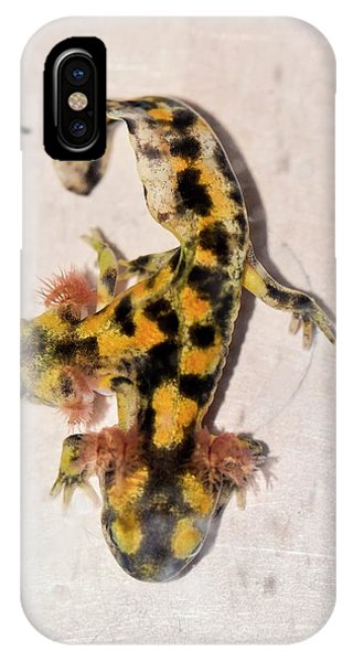 Salamanders iPhone Case - Two-headed Fire Salamander by Photostock-israel