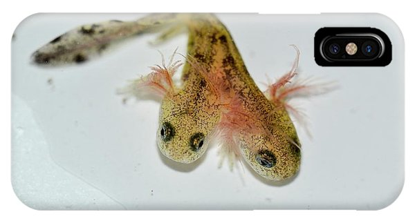 Salamanders iPhone Case - Two-headed Salamander Tadpole by Photostock-israel