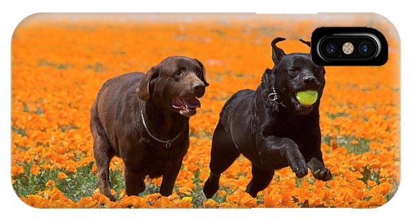 Two Labrador Retrievers Running IPhone Case