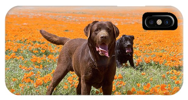 Two Labrador Retrievers Standing IPhone Case