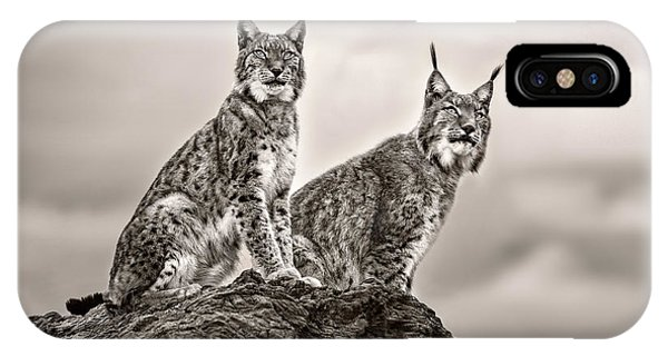Lynx iPhone Case - Two Lynx On Rock by Xavier Ortega