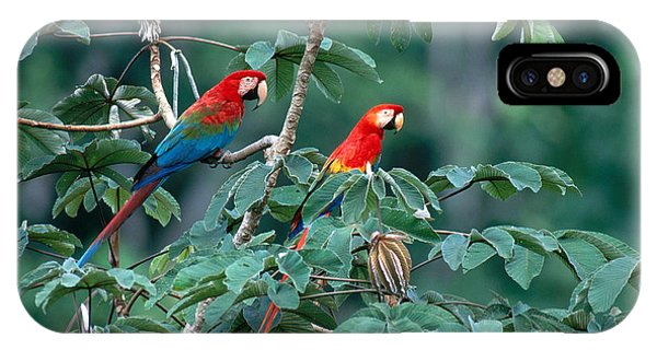 Macaw iPhone Case - Two Macaws by Art Wolfe