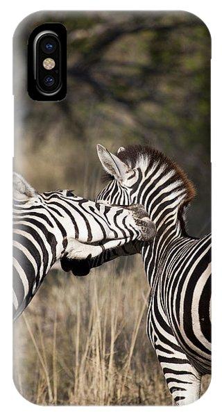 Two Plains Zebra Botswana IPhone Case