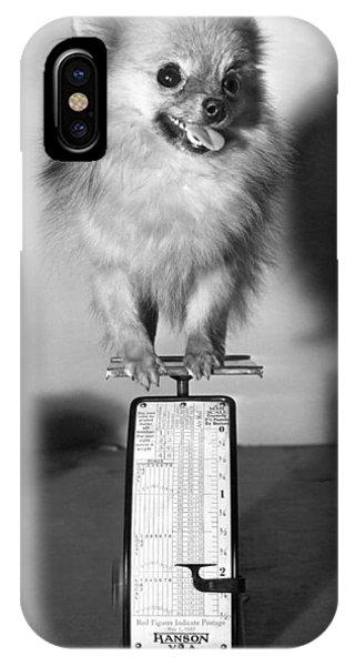 Pomeranian iPhone Case - Two Pounds Of Pomeranian by Underwood Archives