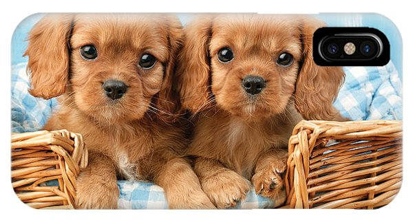 Sitting iPhone Case - Two Puppies In Woven Basket Dp709 by Greg Cuddiford