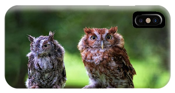 Two Screech Owls IPhone Case