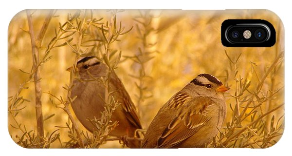 Little Things iPhone Case - Two Small Birds by Jeff Swan