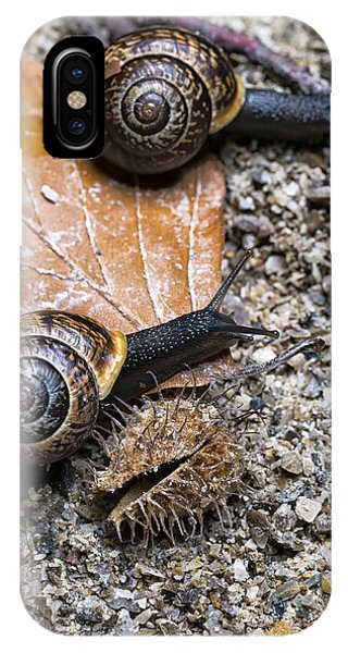 Two Snails Competing With Each Other On An Autumn Background IPhone Case