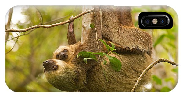 Two-toed Sloth Phone Case by Brian Magnier